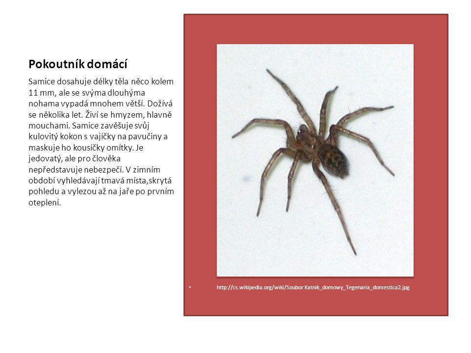 Pokoutník domácí http://cs.wikipedia.org/wiki/Soubor:Katnik_domowy_Tegenaria_domestica2.jpg.