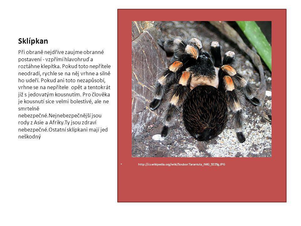 Sklípkan http://cs.wikipedia.org/wiki/Soubor:Tarantula_IMG_9229g.JPG.