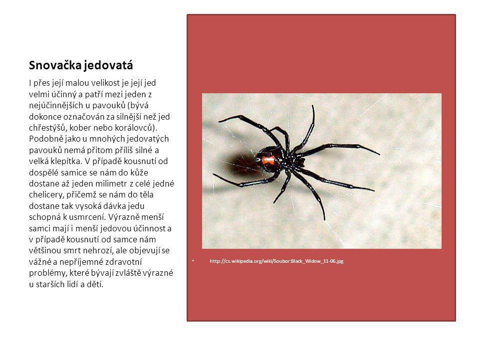 Snovačka jedovatá http://cs.wikipedia.org/wiki/Soubor:Black_Widow_11-06.jpg.