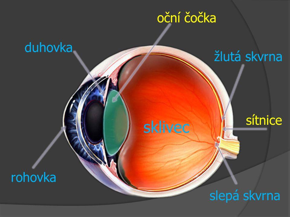 oční čočka duhovka žlutá skvrna sítnice sklivec rohovka slepá skvrna
