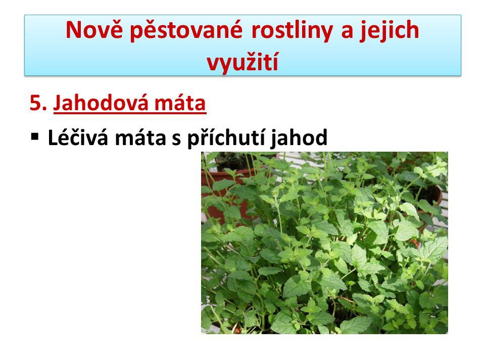 Nově pěstované rostliny a jejich využití