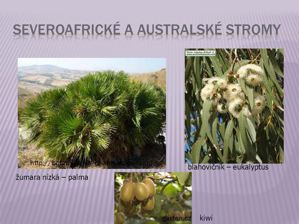 Severoafrické a australské stromy