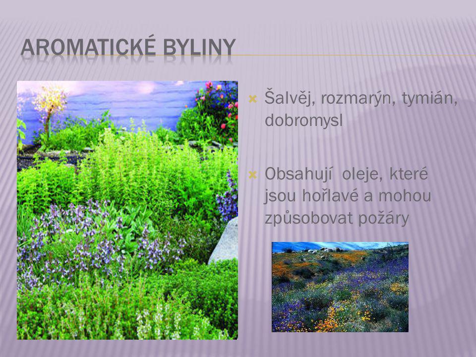 Aromatické byliny Šalvěj, rozmarýn, tymián, dobromysl