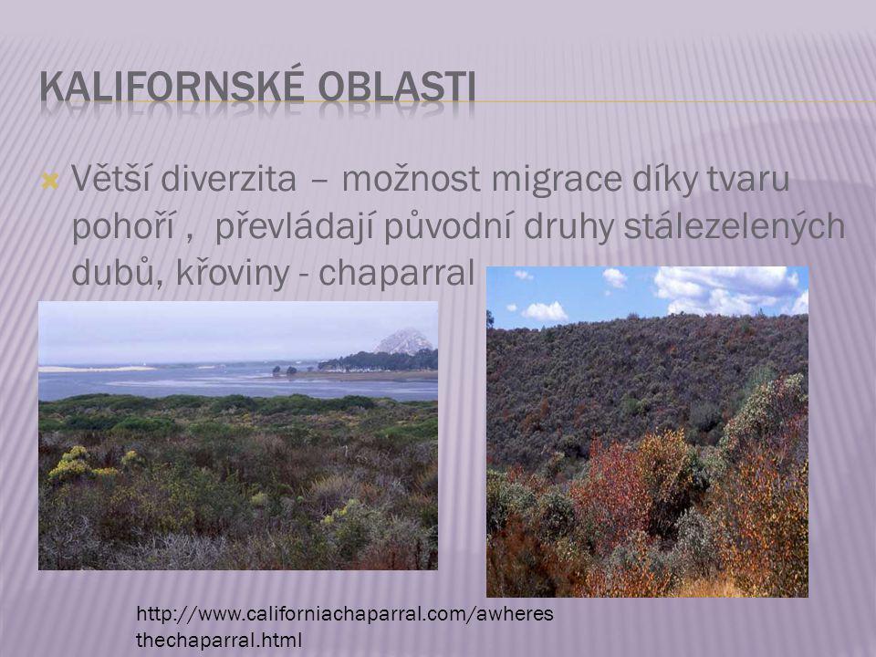 Kalifornské oblasti Větší diverzita – možnost migrace díky tvaru pohoří , převládají původní druhy stálezelených dubů, křoviny - chaparral.