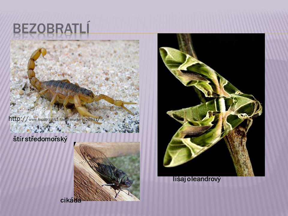 bezobratlí http://www.biolib.cz/cz/taxonimage/id26941/