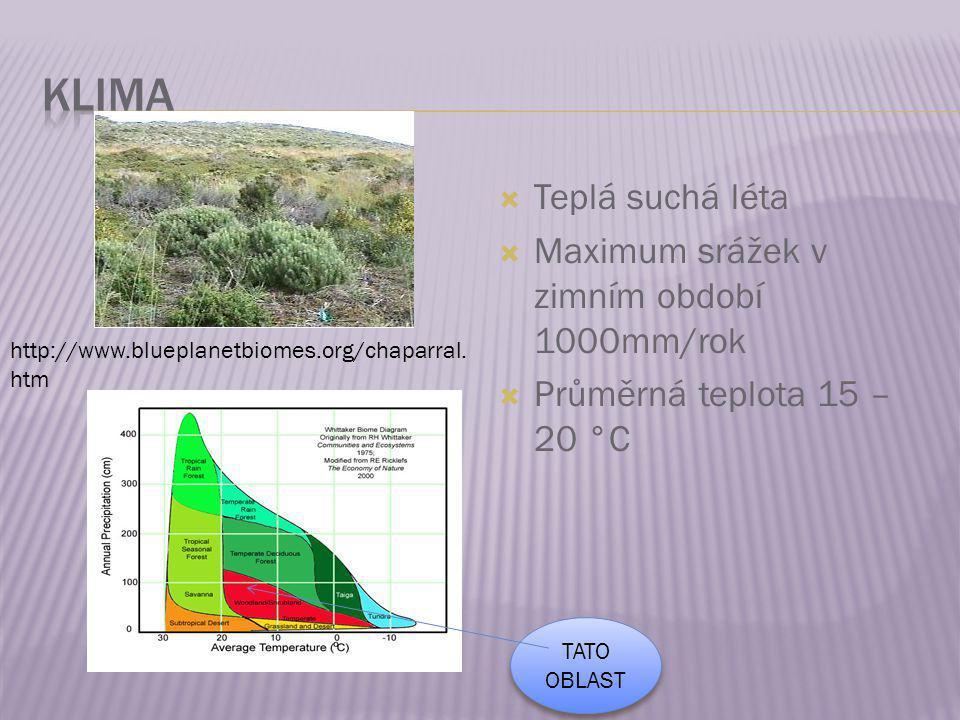 KLIMA Teplá suchá léta Maximum srážek v zimním období 1000mm/rok