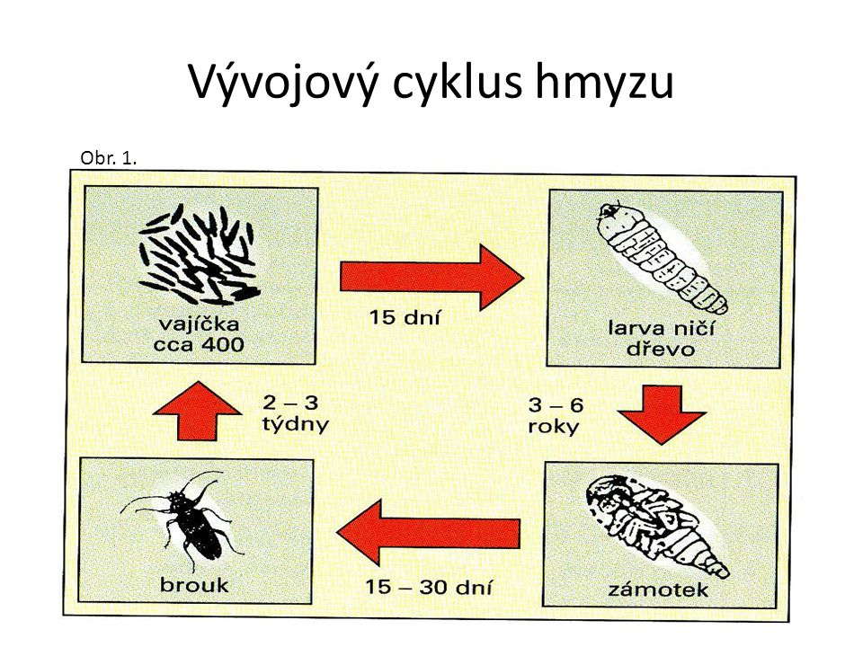 Vývojový cyklus hmyzu Obr. 1.