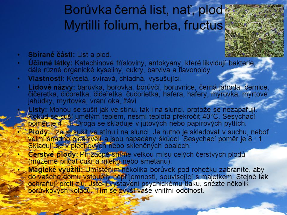 Borůvka černá list, nať, plod Myrtilli folium, herba, fructus