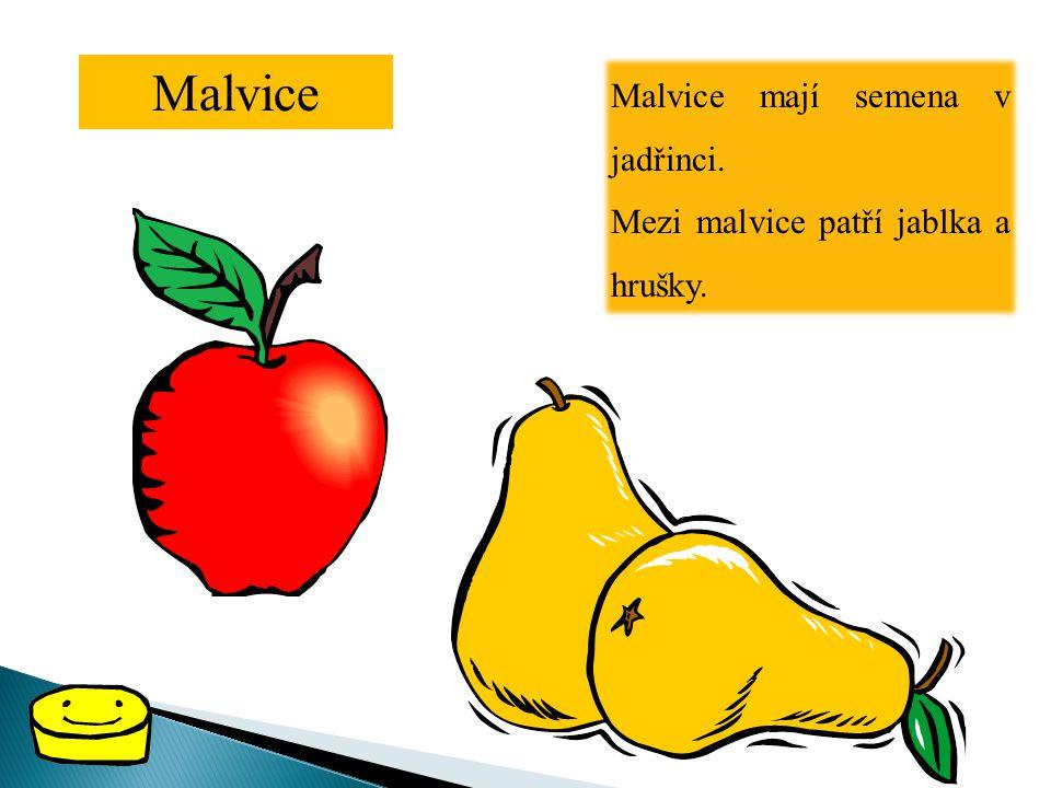 Malvice Malvice mají semena v jadřinci.