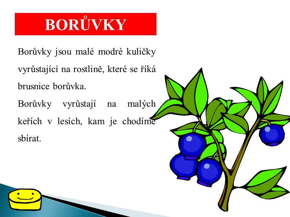 BORŮVKY Borůvky jsou malé modré kuličky vyrůstající na rostlině, které se říká brusnice borůvka.