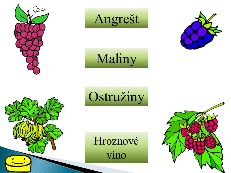 Angrešt Maliny Ostružiny Hroznové víno