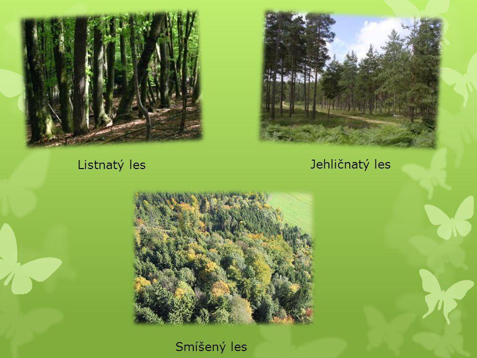 Listnatý les Jehličnatý les Smíšený les