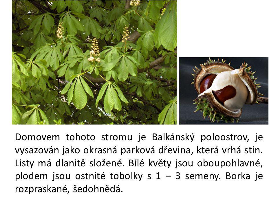 Domovem tohoto stromu je Balkánský poloostrov, je vysazován jako okrasná parková dřevina, která vrhá stín.