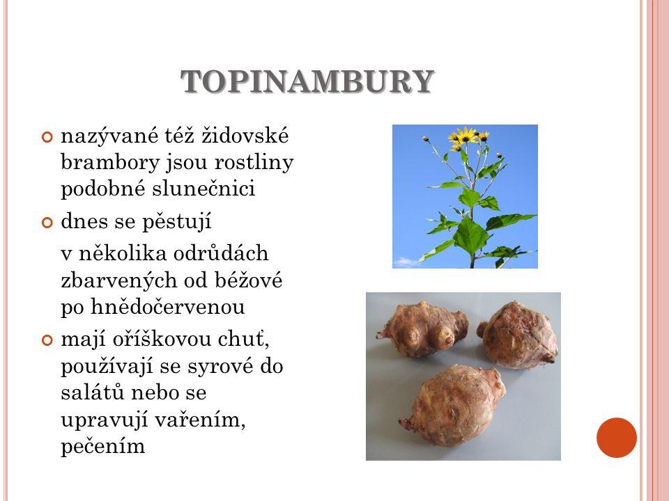 topinambury nazývané též židovské brambory jsou rostliny podobné slunečnici. dnes se pěstují.