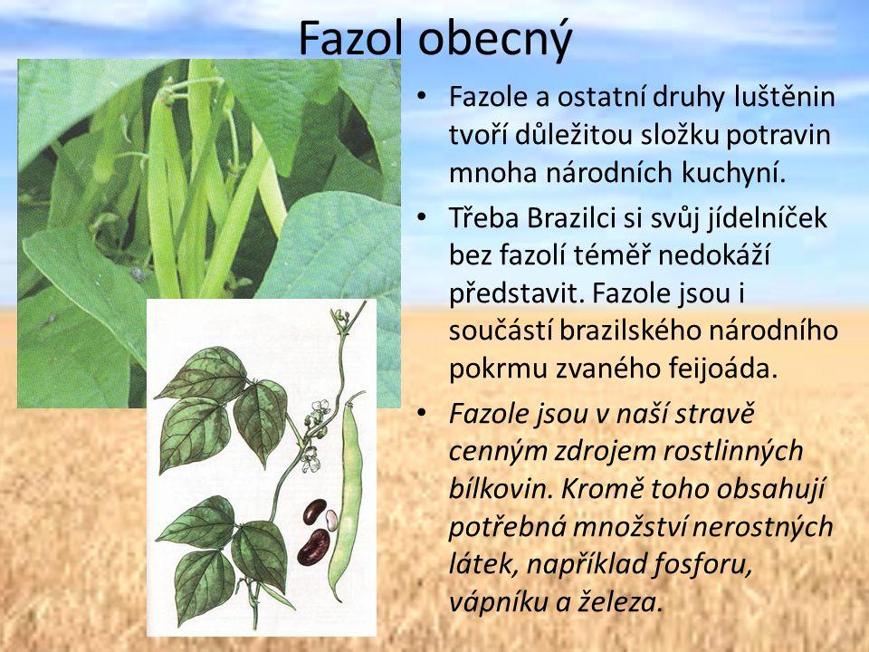 Fazol obecný Fazole a ostatní druhy luštěnin tvoří důležitou složku potravin mnoha národních kuchyní.