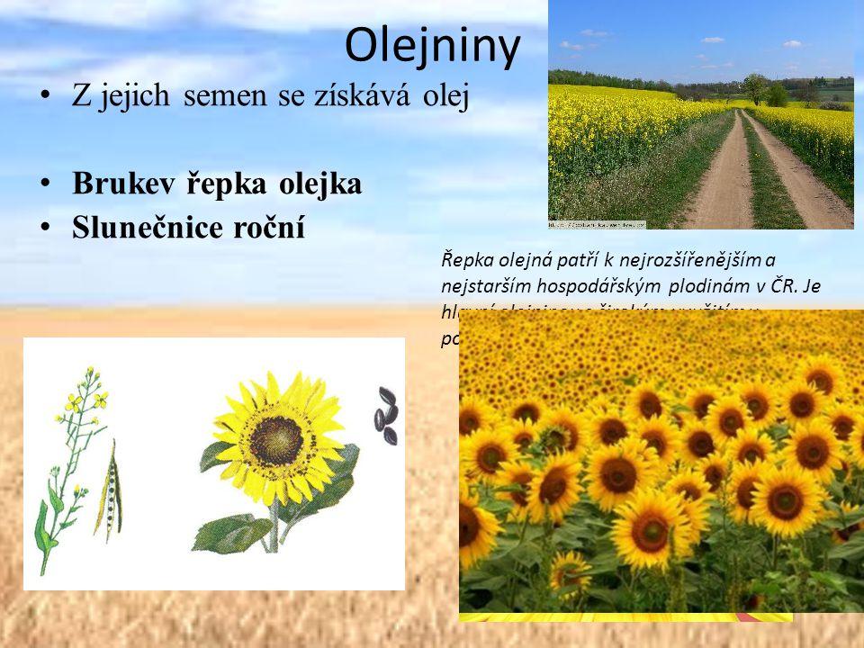 Olejniny Z jejich semen se získává olej Brukev řepka olejka