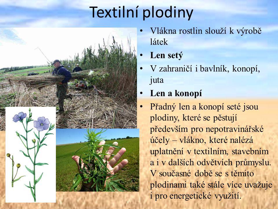 Textilní plodiny Vlákna rostlin slouží k výrobě látek Len setý