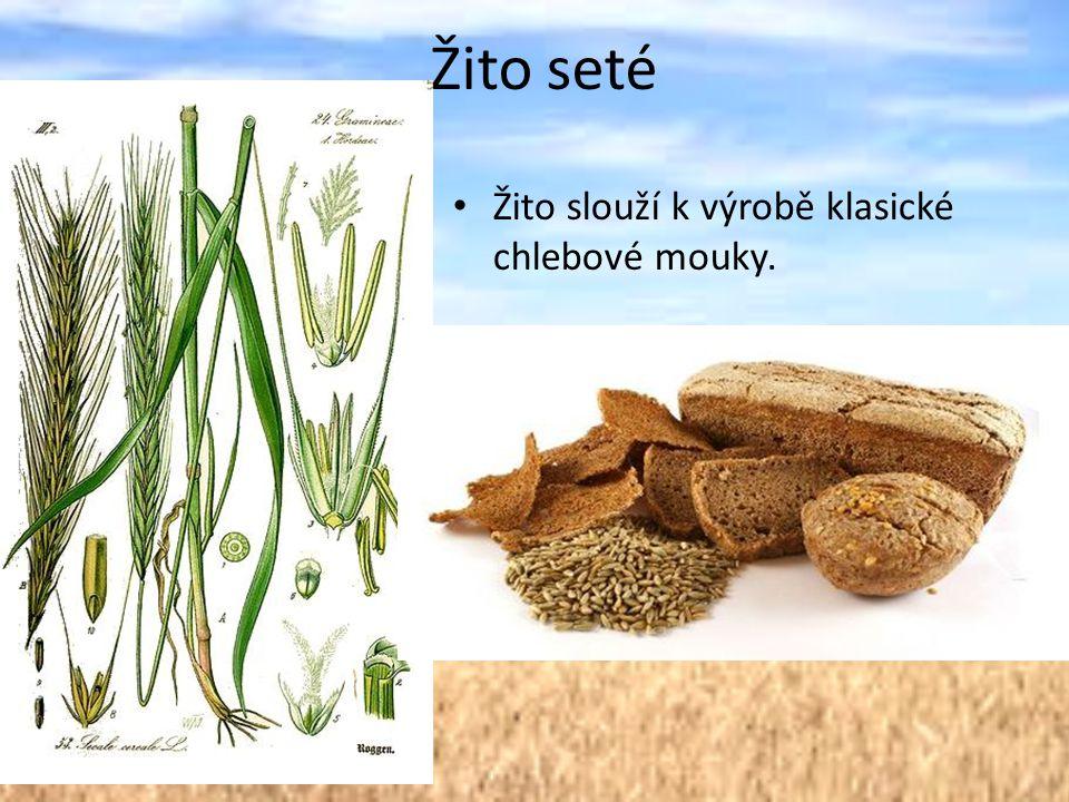 Žito seté Žito slouží k výrobě klasické chlebové mouky.