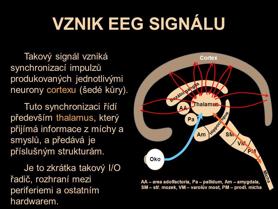VZNIK EEG SIGNÁLU Takový signál vzniká synchronizací impulzů produkovaných jednotlivými neurony cortexu (šedé kůry).