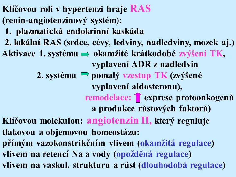 Klíčovou roli v hypertenzi hraje RAS