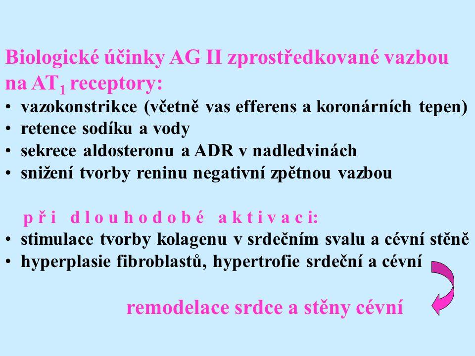 Biologické účinky AG II zprostředkované vazbou na AT1 receptory: