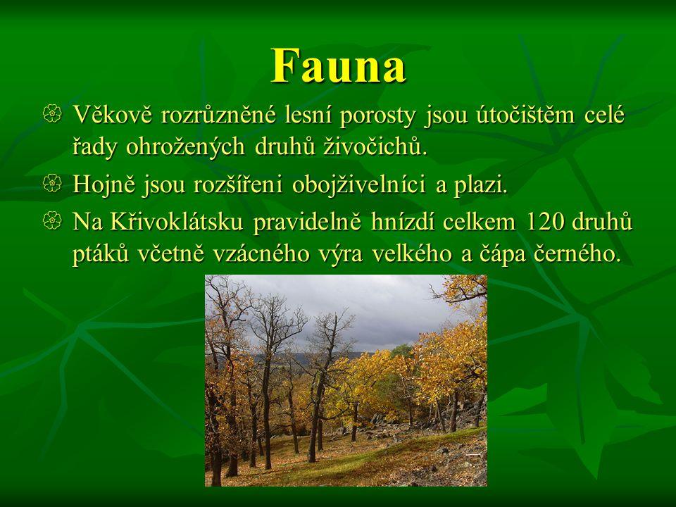 Fauna Věkově rozrůzněné lesní porosty jsou útočištěm celé řady ohrožených druhů živočichů. Hojně jsou rozšířeni obojživelníci a plazi.