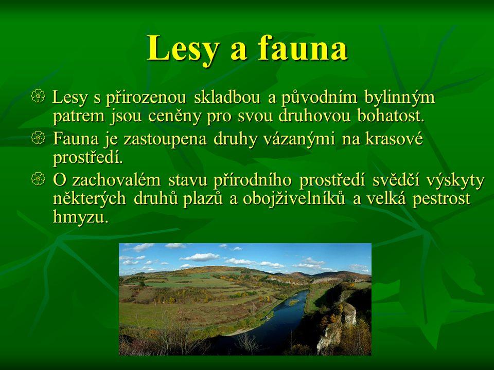 Lesy a fauna Fauna je zastoupena druhy vázanými na krasové prostředí.