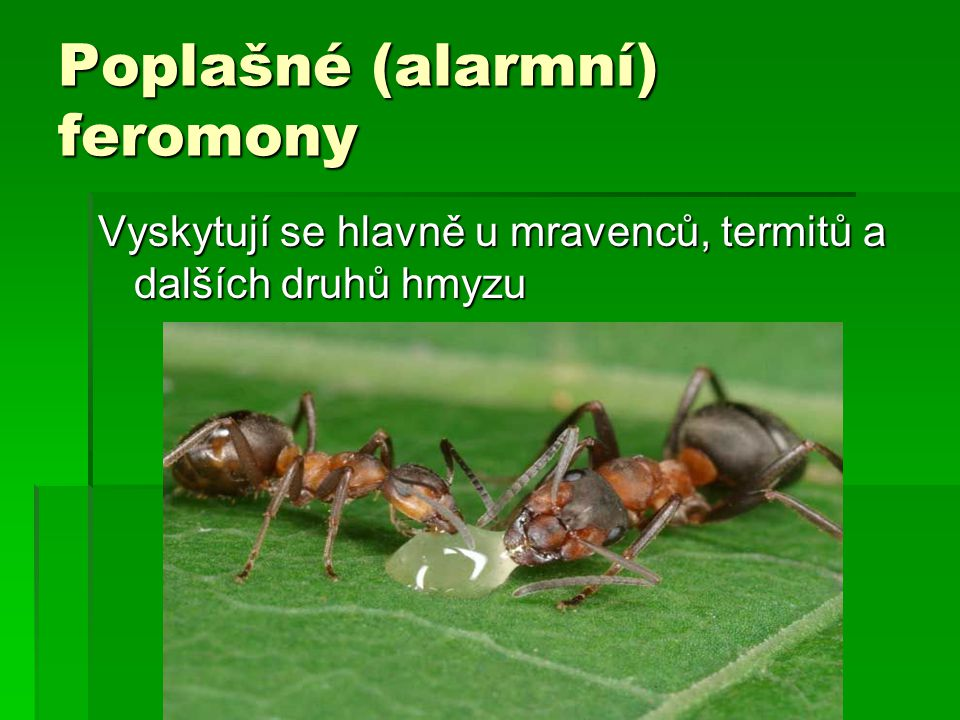 Poplašné (alarmní) feromony