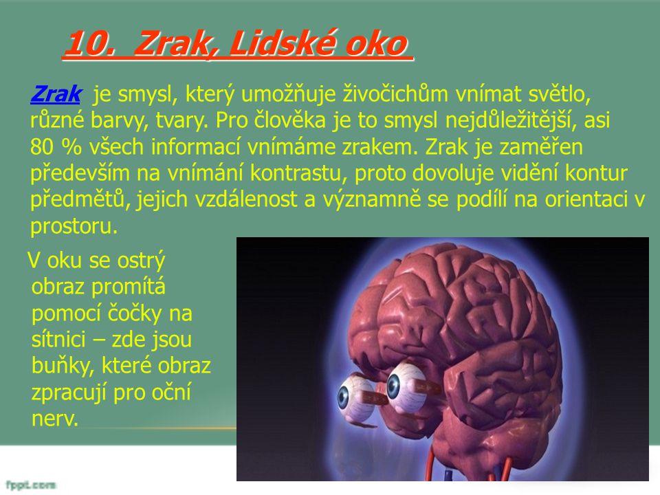10. Zrak, Lidské oko