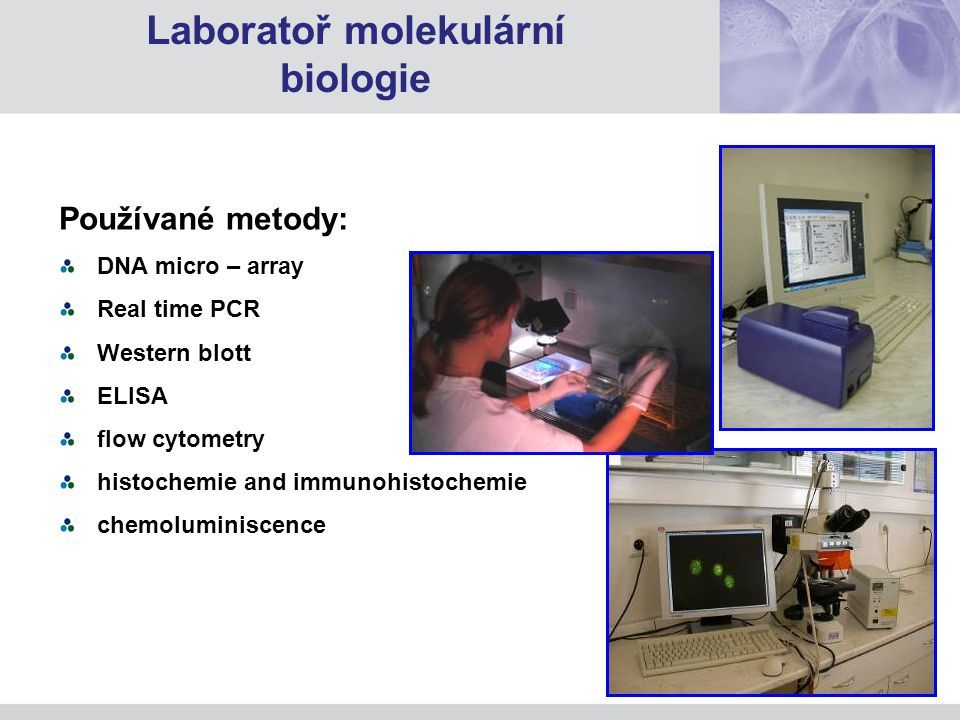 Laboratoř molekulární biologie
