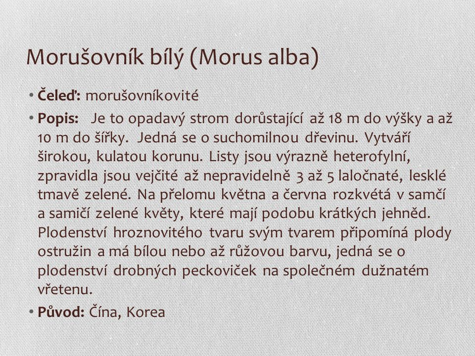 Morušovník bílý (Morus alba)