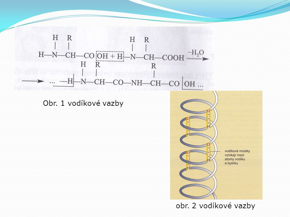 Obr. 1 vodíkové vazby obr. 2 vodíkové vazby