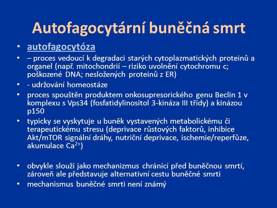Autofagocytární buněčná smrt