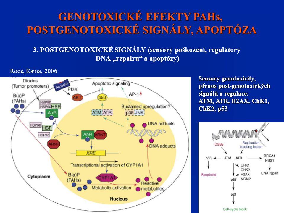 GENOTOXICKÉ EFEKTY PAHs, POSTGENOTOXICKÉ SIGNÁLY, APOPTÓZA