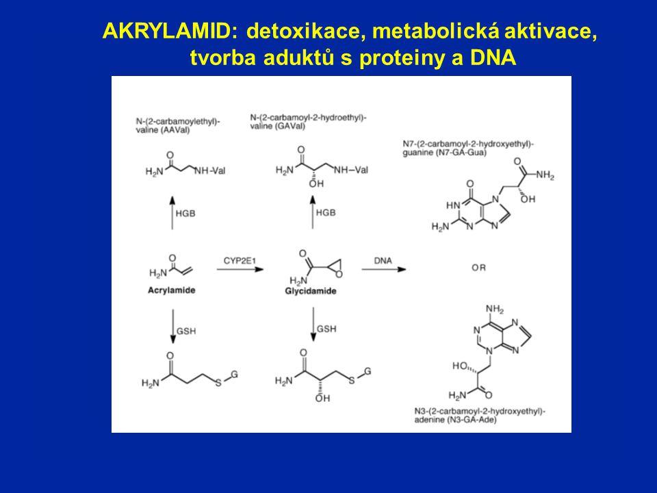 AKRYLAMID: detoxikace, metabolická aktivace,