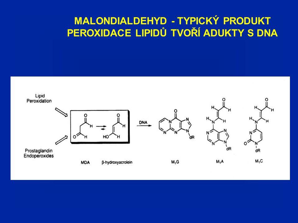 MALONDIALDEHYD - TYPICKÝ PRODUKT PEROXIDACE LIPIDŮ TVOŘÍ ADUKTY S DNA