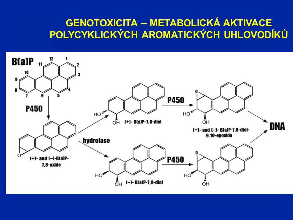 GENOTOXICITA – METABOLICKÁ AKTIVACE