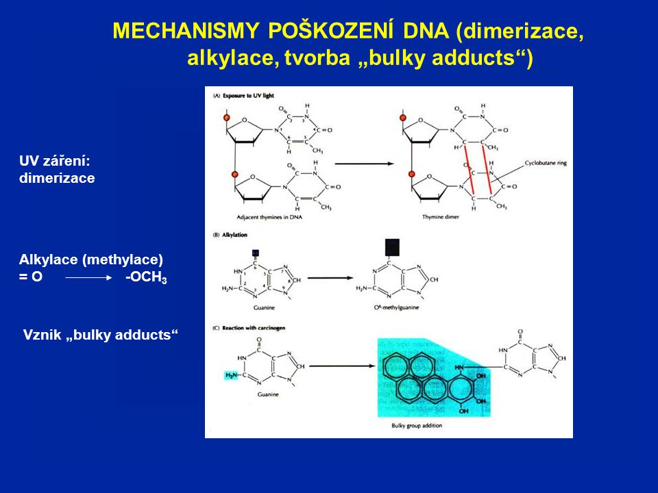 """MECHANISMY POŠKOZENÍ DNA (dimerizace, alkylace, tvorba """"bulky adducts )"""