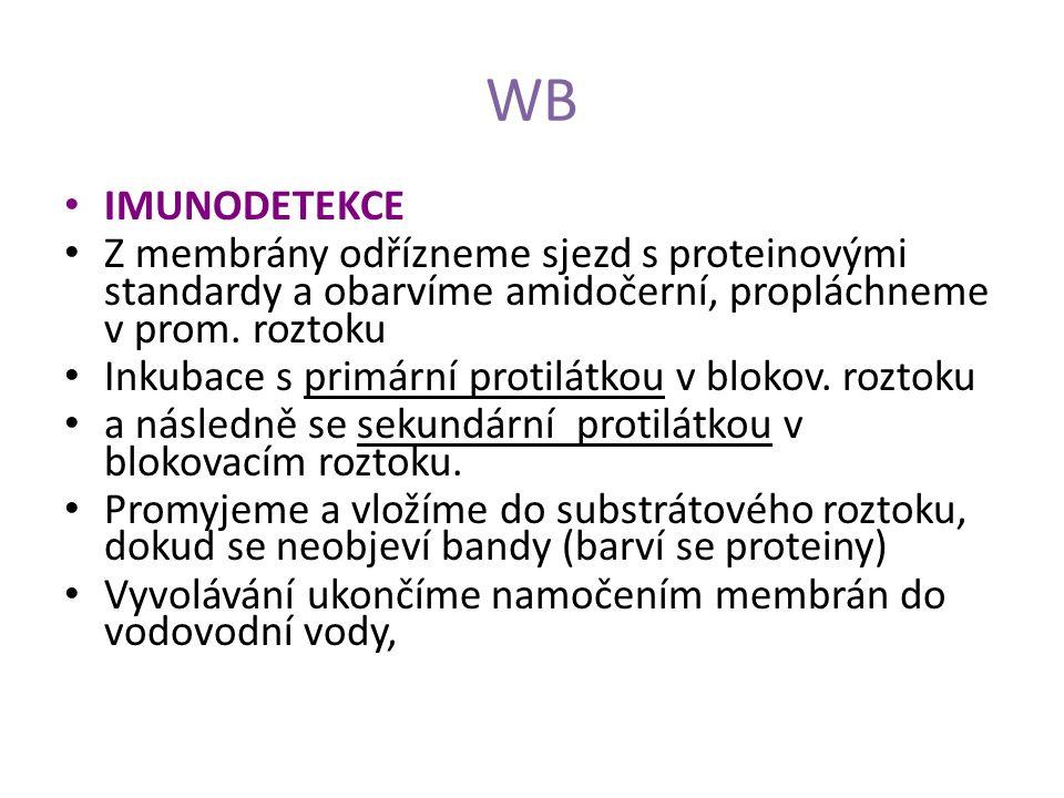 WB IMUNODETEKCE. Z membrány odřízneme sjezd s proteinovými standardy a obarvíme amidočerní, propláchneme v prom. roztoku.