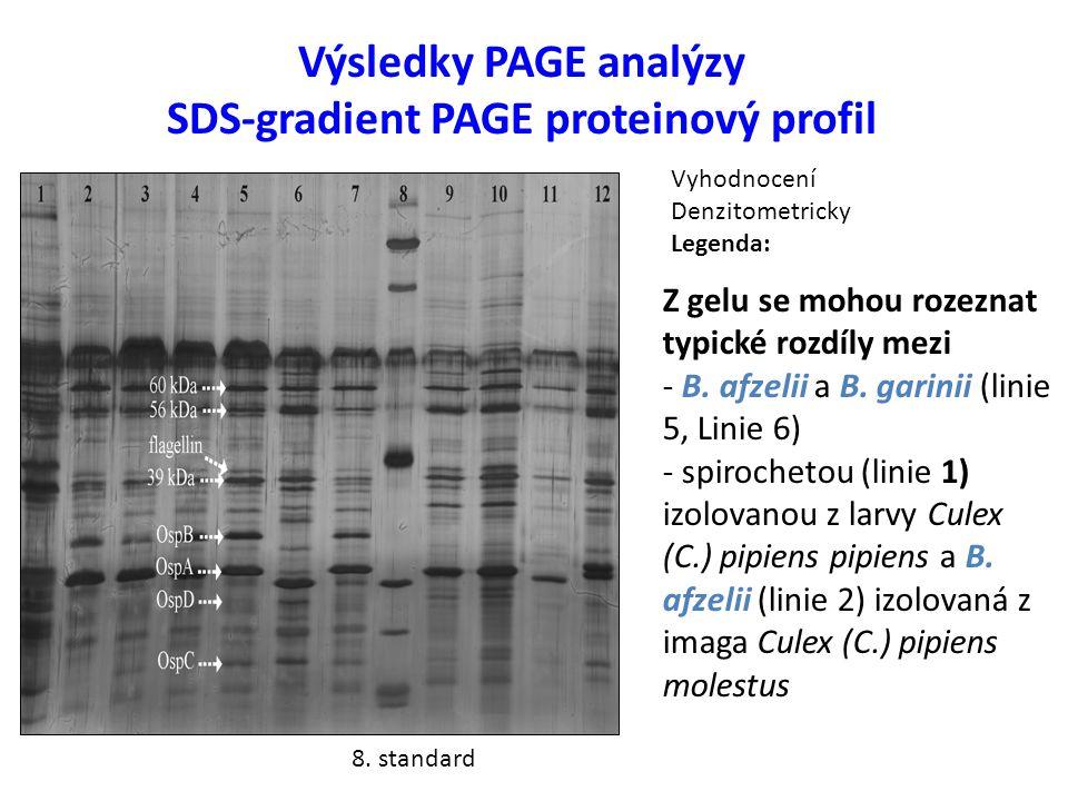 Výsledky PAGE analýzy SDS-gradient PAGE proteinový profil