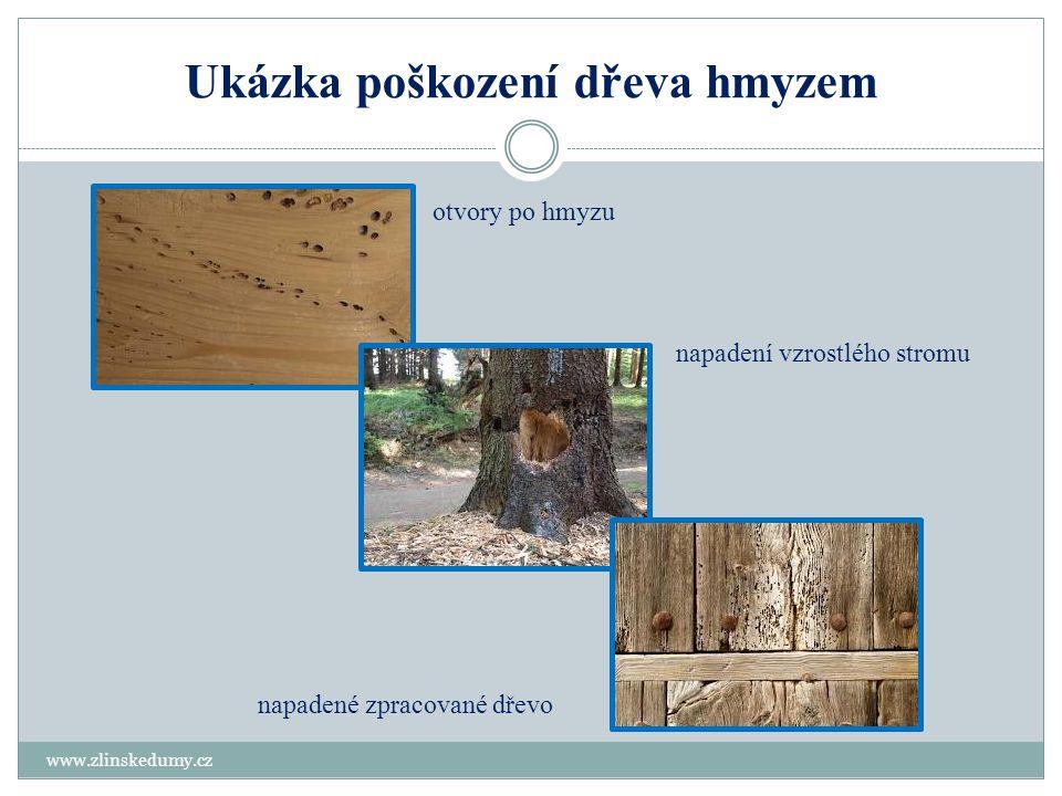 Ukázka poškození dřeva hmyzem