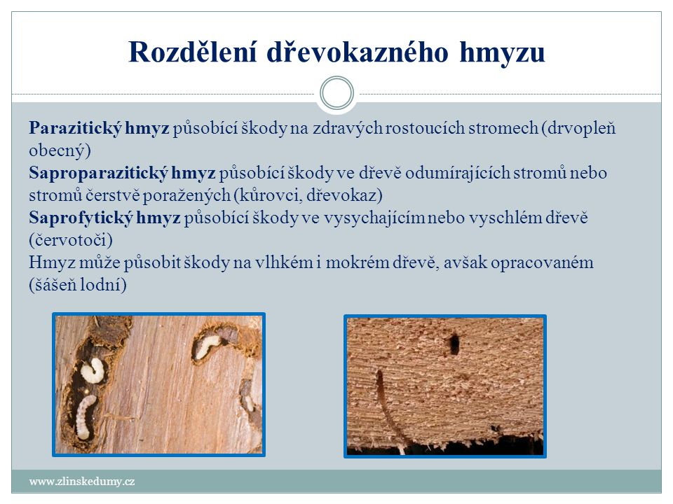 Rozdělení dřevokazného hmyzu