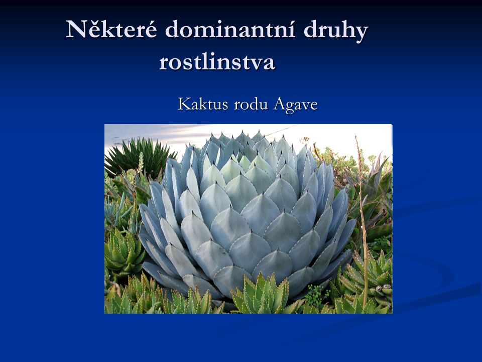 Některé dominantní druhy rostlinstva