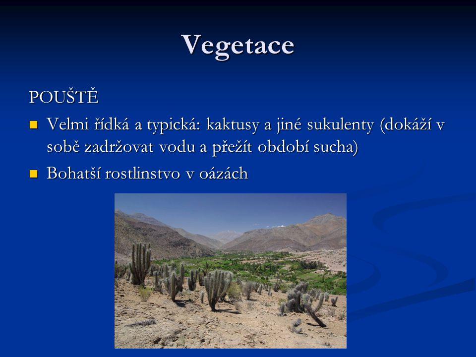 Vegetace POUŠTĚ. Velmi řídká a typická: kaktusy a jiné sukulenty (dokáží v sobě zadržovat vodu a přežít období sucha)