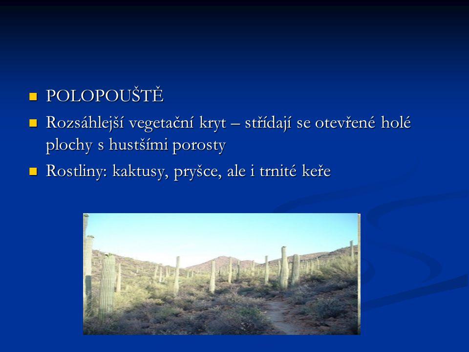 POLOPOUŠTĚ Rozsáhlejší vegetační kryt – střídají se otevřené holé plochy s hustšími porosty.