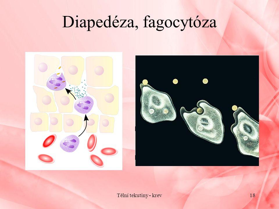 Diapedéza, fagocytóza Tělní tekutiny - krev