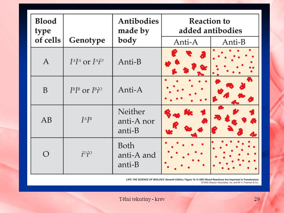 Tělní tekutiny - krev