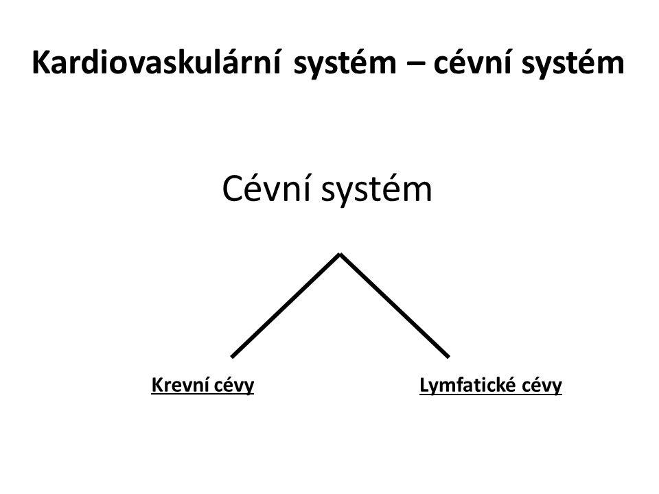 Kardiovaskulární systém – cévní systém