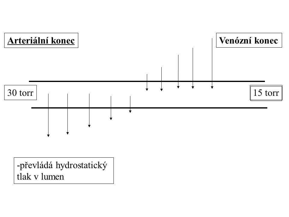 Arteriální konec Venózní konec 30 torr 15 torr -převládá hydrostatický tlak v lumen