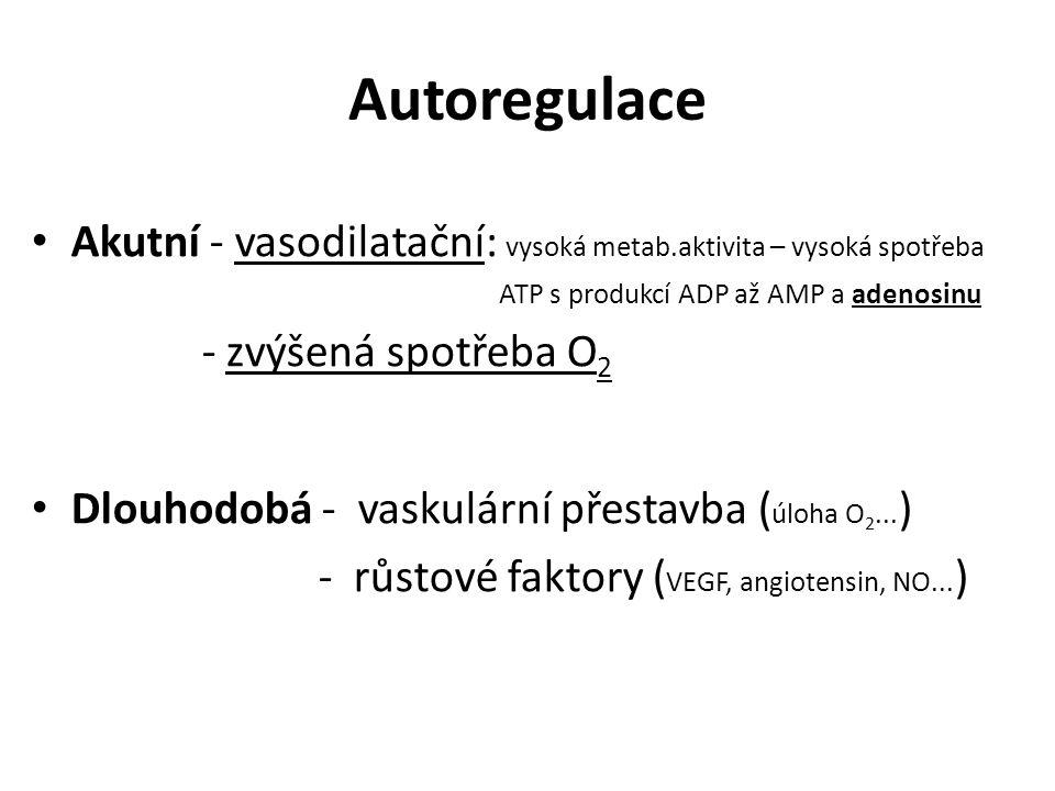 Autoregulace Akutní - vasodilatační: vysoká metab.aktivita – vysoká spotřeba. ATP s produkcí ADP až AMP a adenosinu.
